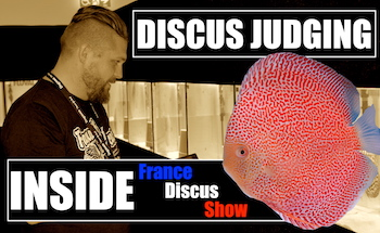 Image has an Inside FRANCE DISCUS SHOW cognac