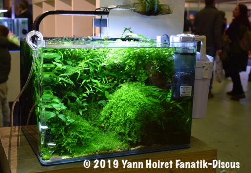 Aquarium planted Vivarium 2018 Netherlands