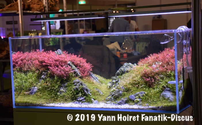 Aquascaping au Vivarium 2018