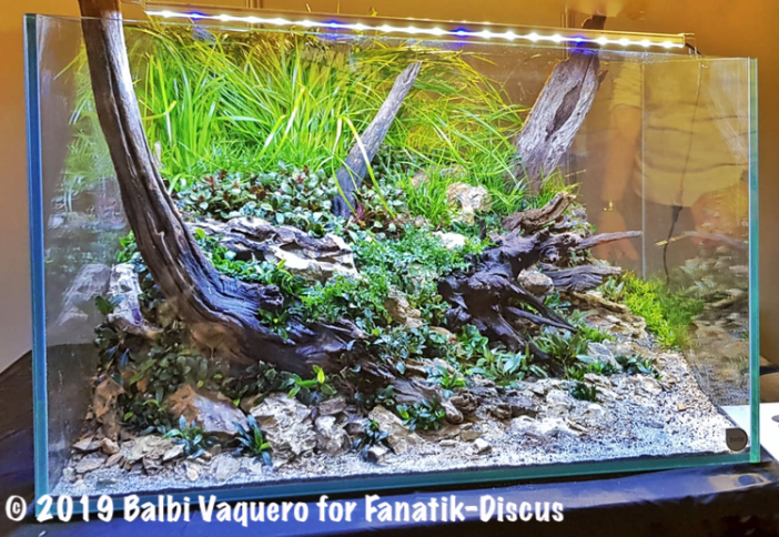 Balbi Vaquero Champion Aquascaping Vivarium 2018