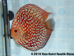 2nd large pattern meeting discus Paris Discus show 2019
