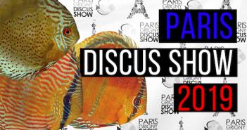 Image a la une Paris-Grigny Discus Show 2019
