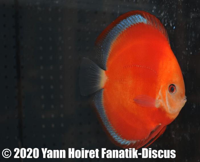2nd Solid planete discus Vivarium De discusvrienden 2019