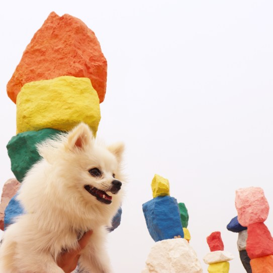pomeranian at seven magic mountains photo location