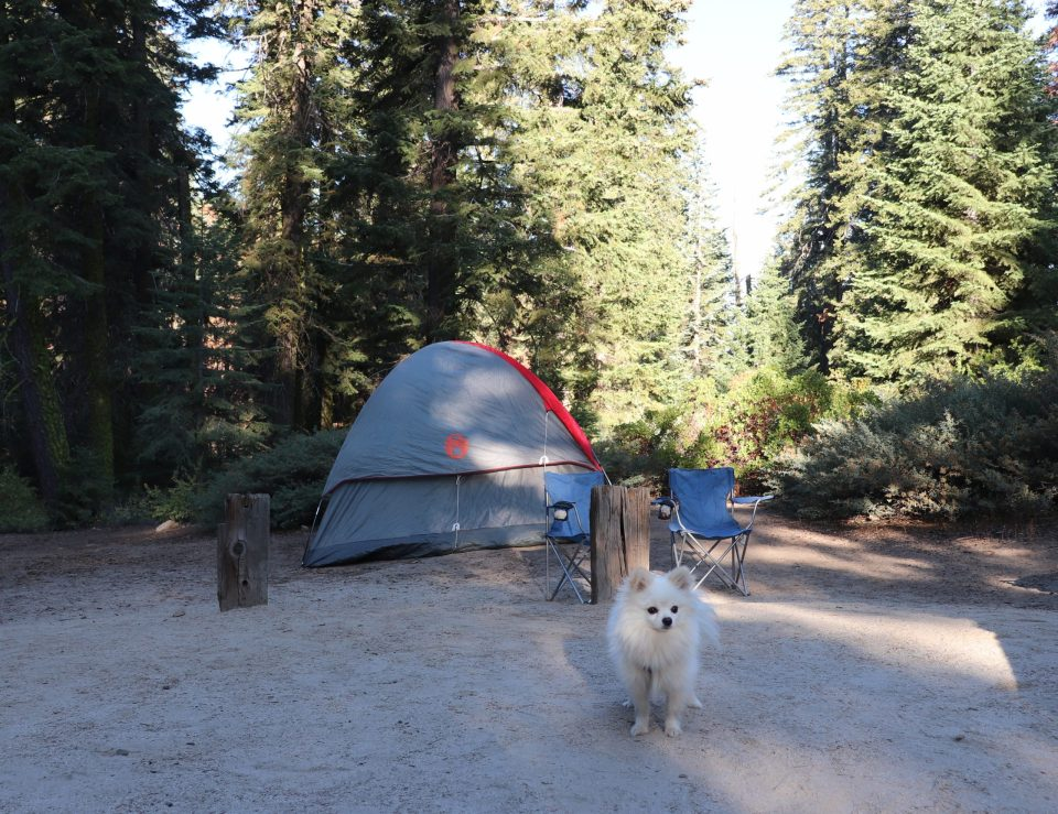 pomeranian camping