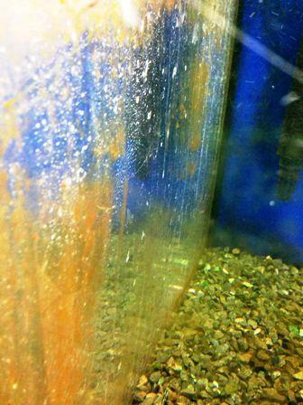 Algas en el acuario c mo eliminarlas fanmascotas Antialgas para estanques con peces