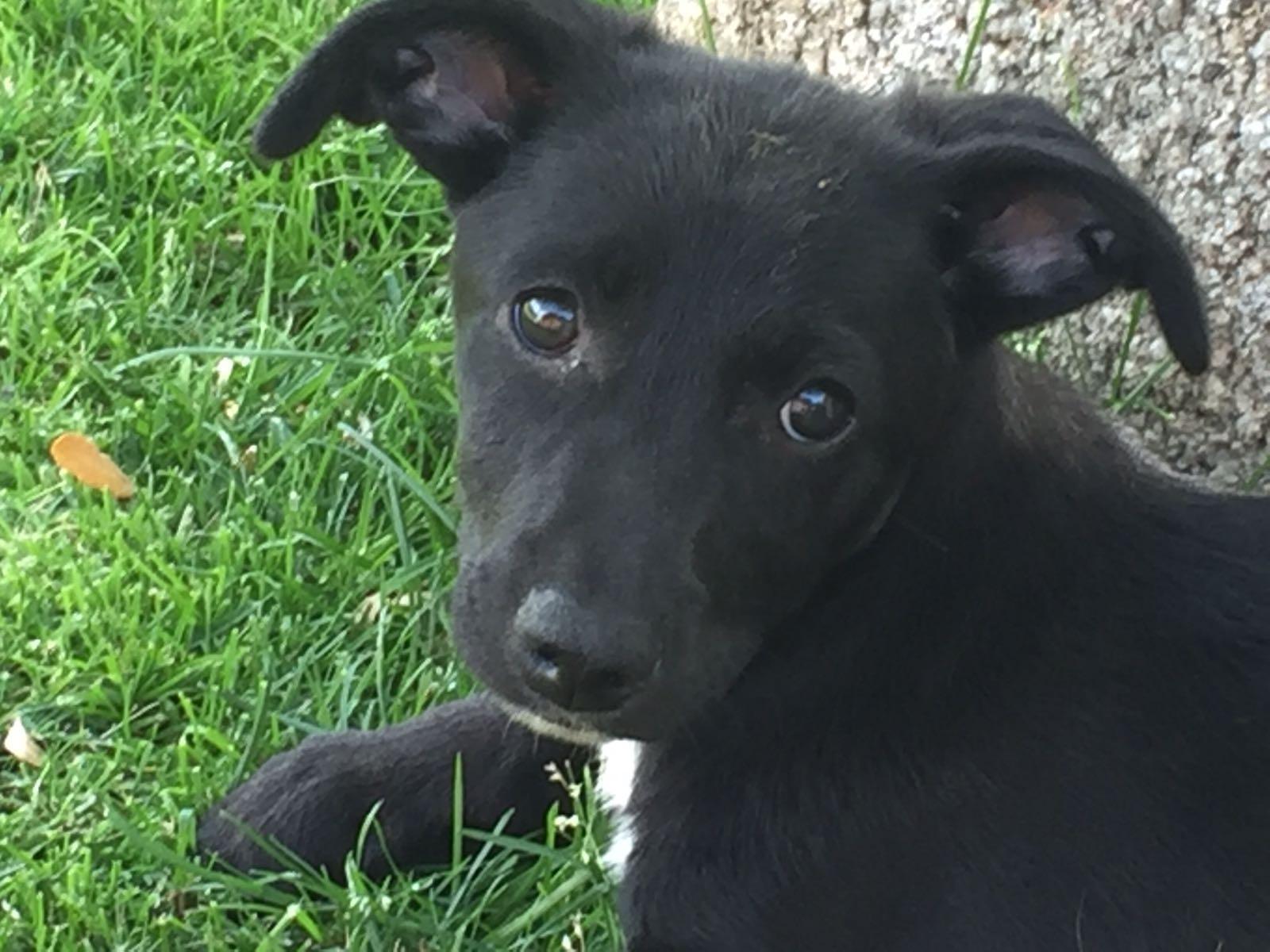 Adopción Perros Adultos Y Cachorros En Adopción En Madrid