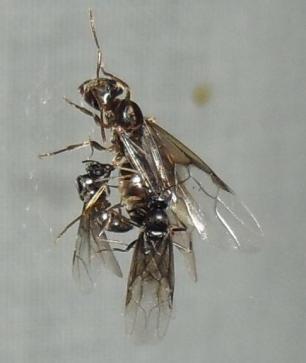 Un hormiguero en casa, cuidados básicos 5