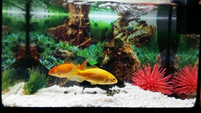 ¿Qué hacer con los peces en vacaciones? Es una de las preguntas básicas para un dependiente de mascotas.
