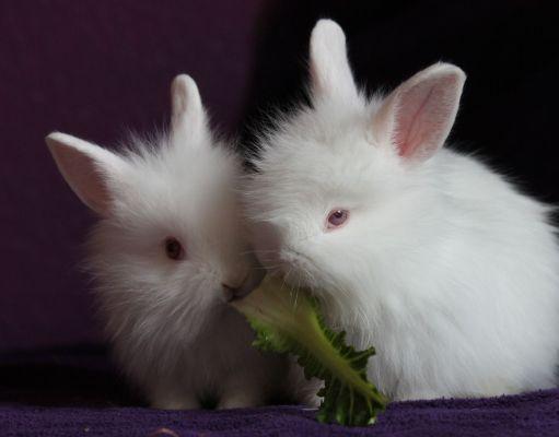 Conejos y plantas venenosas