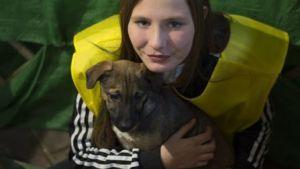 Adopción de perros voluntaria
