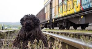 Viaje en renfe con mascota