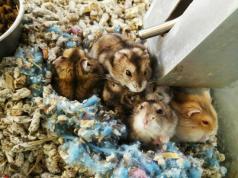 nido del hámster