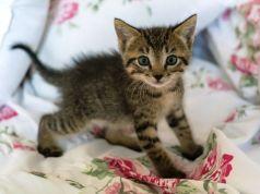 primera consulta veterinaria gatito