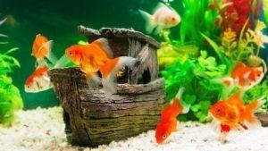grava del acuario infantil