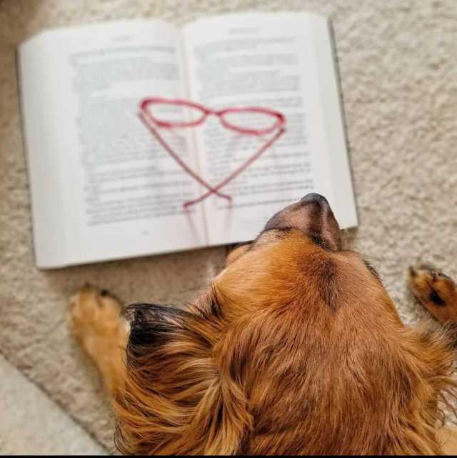 libro de mascotas para adultos