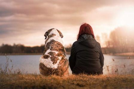 Venta de pienso para tu perro