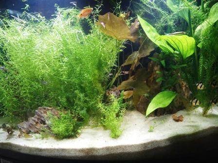 Cómo limpiar troncos de acuario fácilmente 1