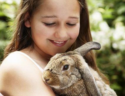Explicar si los conejos enanos crecen