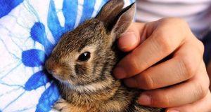 Los conejos enanos crecen