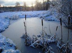 Cuidados del estanque en invierno