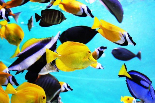 golosinas para peces marinos