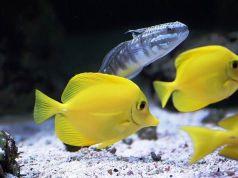 Tienda de peces tropicales de confianza