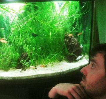 El acuario necesita corriente de agua o no es necesario