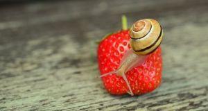 saber qué comen los caracoles