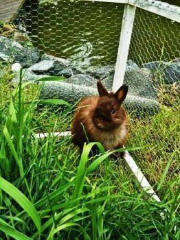 Parques para conejos que viven en el jardín