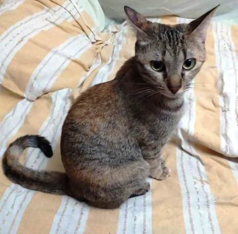Por qué el gato araña el sofá