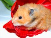 Regalos para hamster