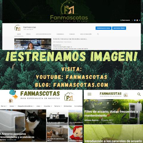 blog de animales y mascotas perros gatos pajaros