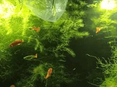 Como aclimatar peces