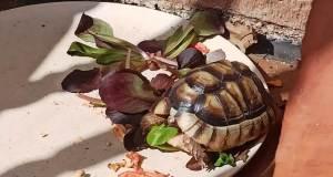 Como cuidar una tortuga de tierra en la hibernación.