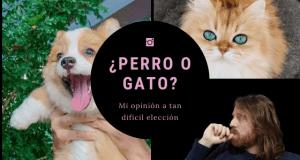 que elegir perro o gato