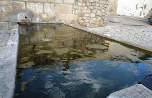Algas verdes alargadas en una fuente que son