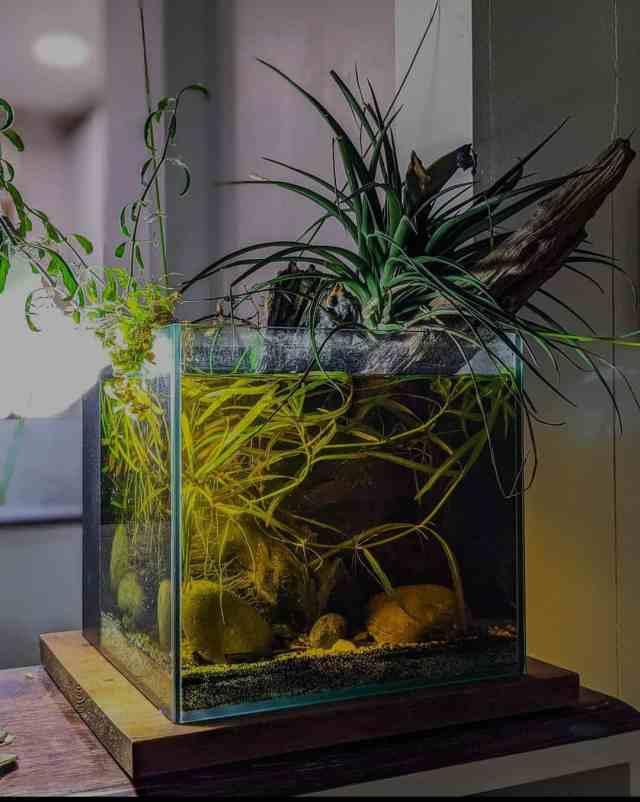 acuario de biotopo agua cristalina