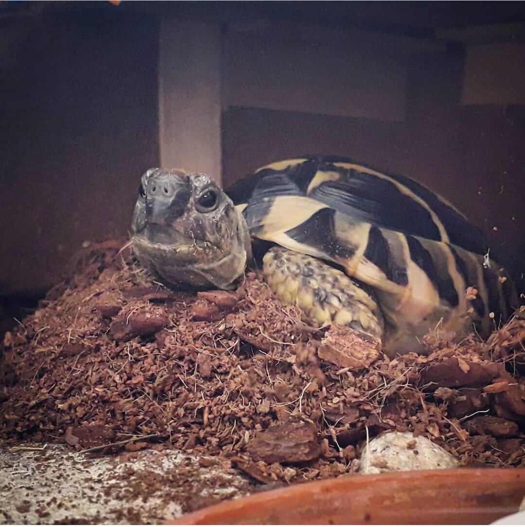 mi tortuga no come que hacer