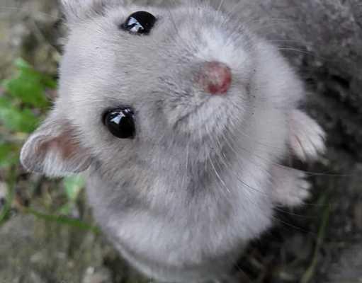 que hacer si mi hamster tiene crias