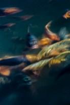 poissons_flous_temple-6