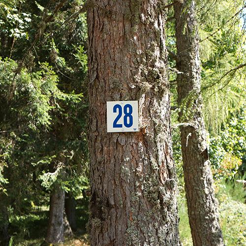 Chiffre 28 Forêt