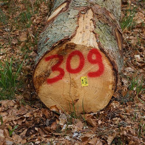 Chiffre 309 Forêt