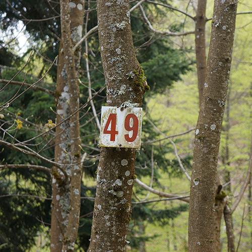 Chiffre 49 Forêt
