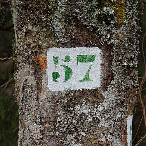 Chiffre 57 Forêt