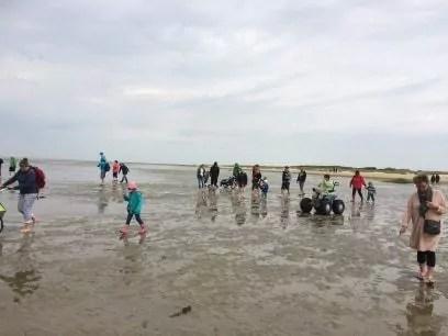 Viele Menschen bei der Fanø Seehundsafari