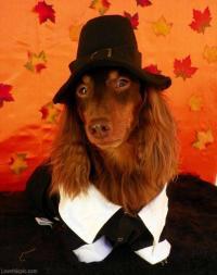 Pilgrim dog cute animals autumn halloween costume ideas ...
