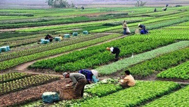 How to Apply for Agric Business Loan