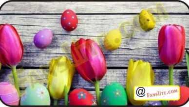 Facebook - Easter Cover Photos for Facebook – Facebook Easter |Facebook Easter Cover