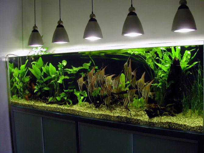 Vasche per acquari artigianali  Fantail